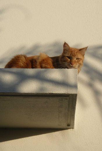 Felix on roof1