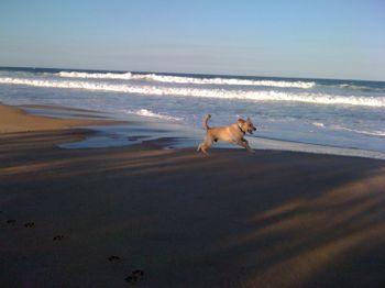 Beach boy1