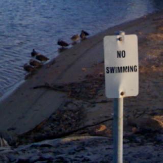 Ducks....