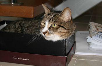 Fatcat in shoebox