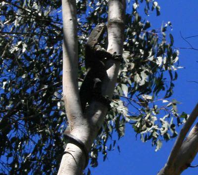 Lizard in tree
