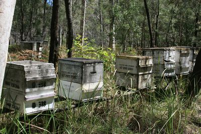 Beehives in the bush