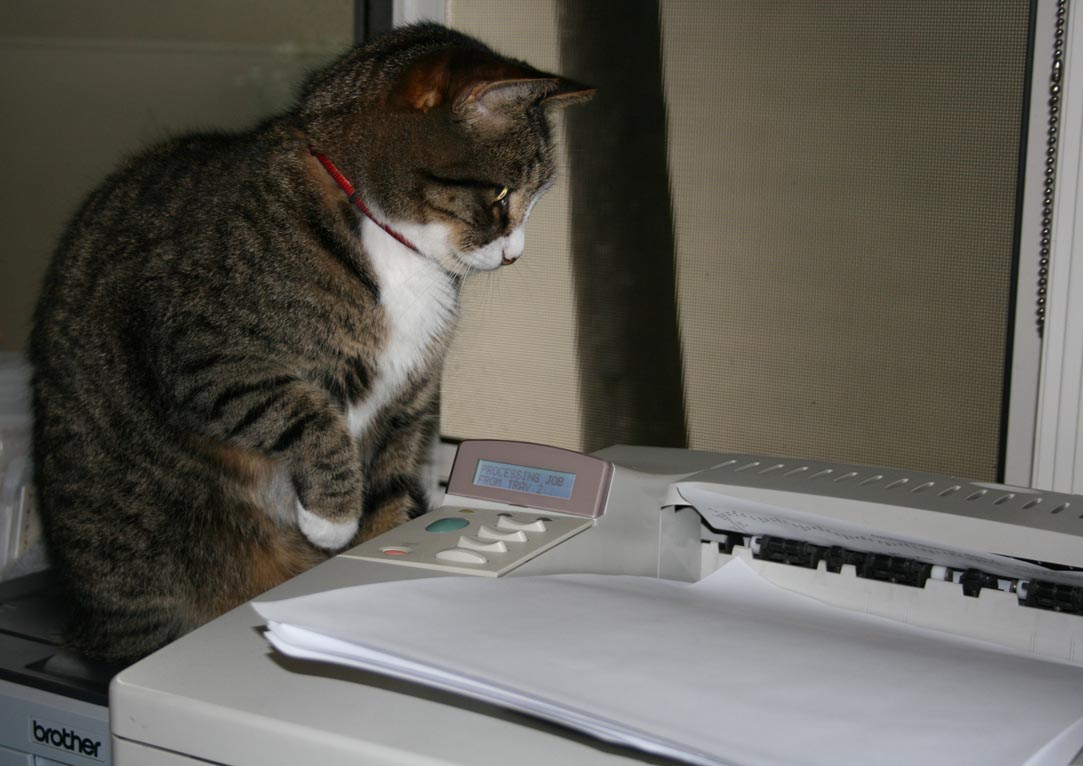 Fatcat watchinh the printer