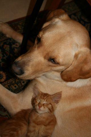 Hugo and felix1