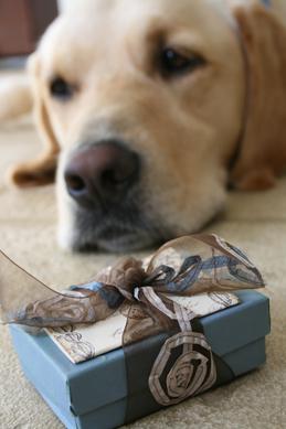 Hugo and box