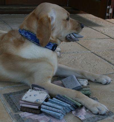 Hugo and fabric