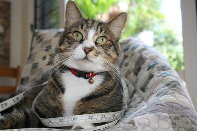 TapemeasureFatcat