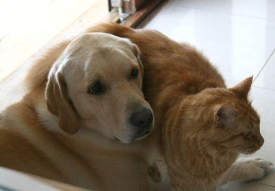 Hugo and felix cute1