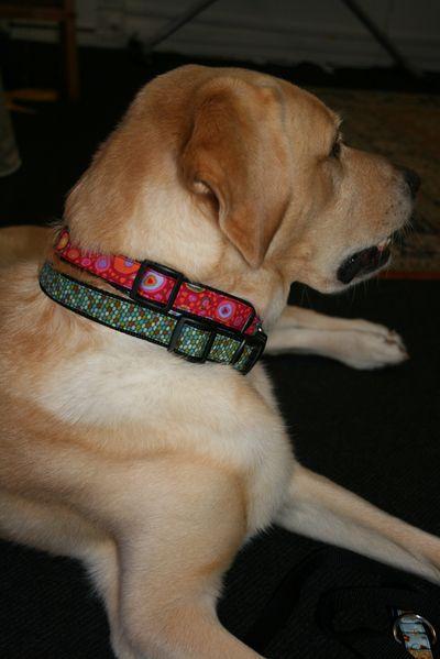 Hugos collar