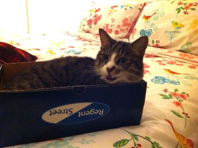 Fatcat in box