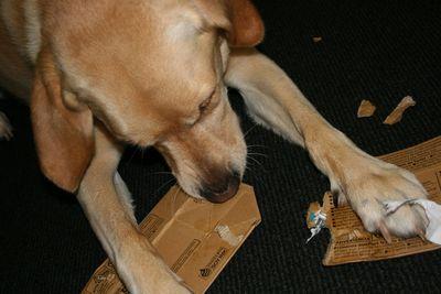 Hugo and cardboard1