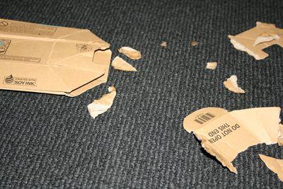 Hugo and cardboard2