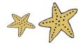 Starfish-01